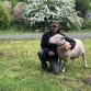 Grasmaaiende schapen zijn een blijvertje in Zutphen: 'we gaan zeker verder'