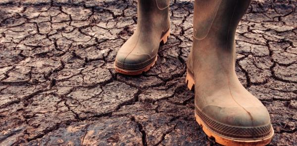 Droogte in de regio komt door klimaatverandering, blijkt uit onderzoek