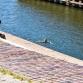 Ondanks verbod zorgt Noorderhaven voor veel waterplezier
