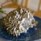 Maitake medicinale paddenstoel: heb jij het al geprobeerd?