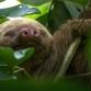 Plannen voor nieuwe dierentuin gaan de prullenbak in na protest