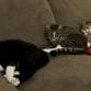 Lochemse kat Diego is vermist