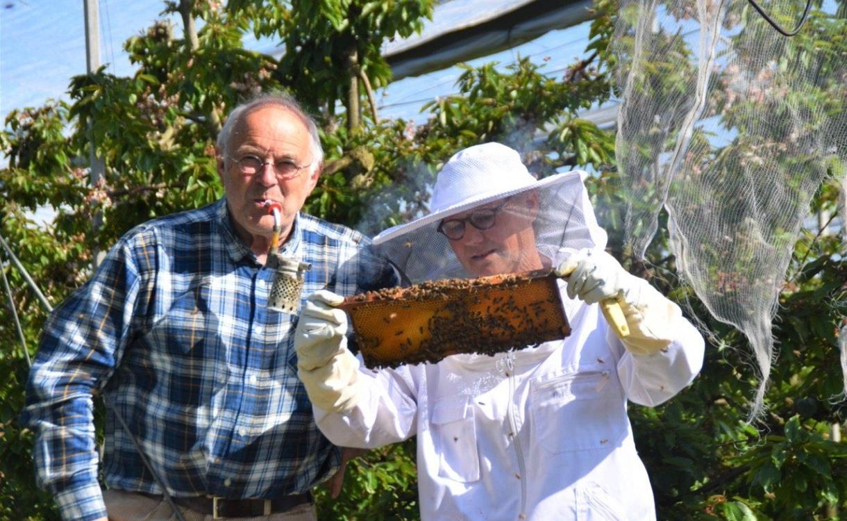 'Het gaat weer beter met de bijen'