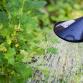 Waterschap: neerslagtekort 2019 loopt op