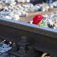 ProRail: 'Onbewaakte spoorwegovergangen moeten snel weg'