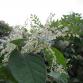 D66 Lochem wil aanpak van vervelende planten