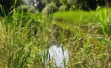 Boeren mogen weer sproeien, waterschap trekt verbod in