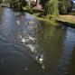 Zwemmers namen een duik in de 'koude' Berkel