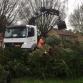 Brummense kerstbomeninzameling levert ruim tweeduizend bomen op