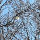 Lochemers vragen zich af: wat wappert er in de bomen?