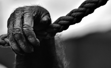Zelfs illegale apen waren niet veilig op de Leuvenheimse kadaverboerderij