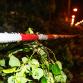 Hevige storm veroorzaakt veel schade in de regio
