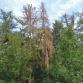 Bossen veranderen door extreme droogte