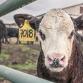 Brummense boer moest verplicht zijn boerderij verlaten