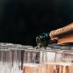 Brummen begroot bijna zeven keer minder voor nieuwjaarsborrel dan Zutphen