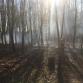 Brandweer weet bosbrandje Veldese Bos Warnsveld snel te blussen