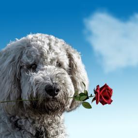 Bronckhorst gaat hondenbezitters controleren