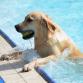 Honden nemen duik in het diepe in Vorden