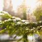 Horeca-ondernemers gaan zelf kerstboom in Zutphense binnenstad zetten