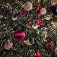 Ook in De Hoven komt een kerstboom te staan