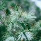 Groep burgers wil kerstbomen dumpen voor stadhuis Zutphen