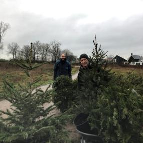 Je kerstboom een nieuw leven geven is dit jaar erg populair